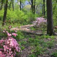 Secret woodland sanctuary in New York's Central Park is reopened after 80 years