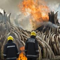 Kenya burns record ton of ivory, warns poachers