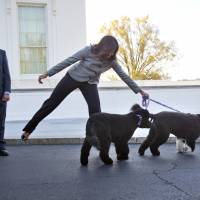 Hardly a dog's life for Obama's pets Bo and Sunny