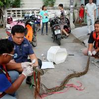 Thai man bloodied but unbowed after snake attacks him in toilet