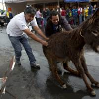 Mexican town's annual festival fetes donkeys with races, fancy dress parade