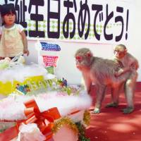 Oita zoo's female macaque named after Britain's Princess Charlotte celebrates first birthday