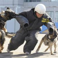 Japan's police seek more security dogs to counter terrorism, cope with disasters
