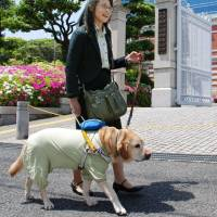 Lawyer Kimiko Yoshie walks with her guide dog, Kuru, in front of the Kobe District Court. | KYODO