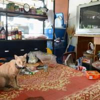 A cat sits on a bed on April 22 at the home of an 81-year-old Japanese man who died in February on the outskirts of Chiang Mai in northern Thailand. | KYODO