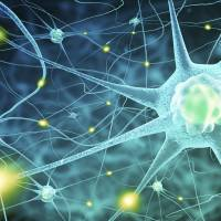 Change in the brain: Central nervous system cells finally get the recognition they deserve