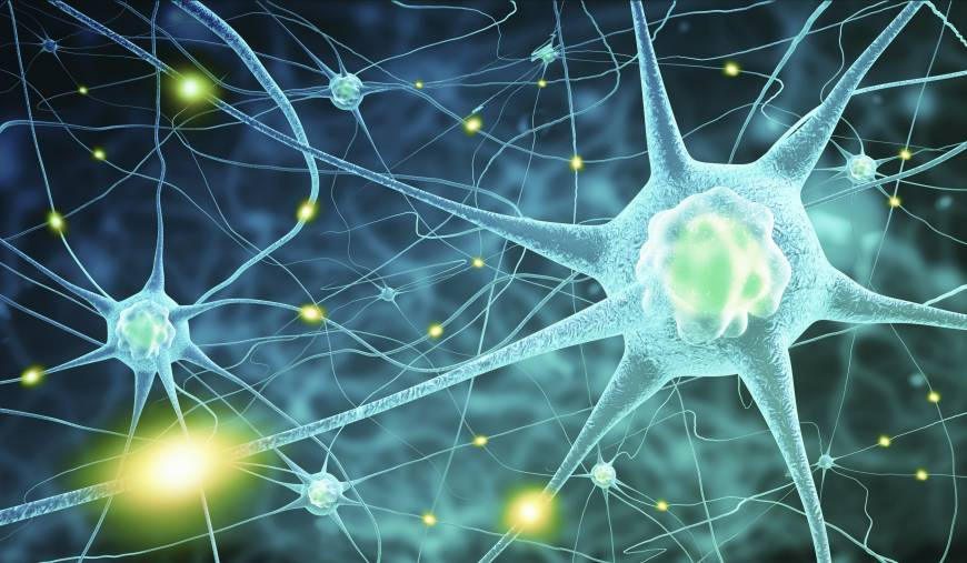 Change In The Brain Central Nervous System Cells Finally Get The