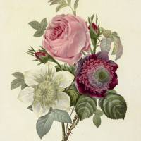 'Flora! Banquet of Flowers — Pierre-Joseph Redoute's Fairest Flowers and Historical Botanical Illustrations'