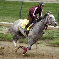 Lani to become first Japan-based horse in Preakness
