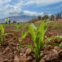 Angst grows over agrochemical mega-mergers
