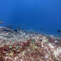 Scientists blame El Nino, man-made warming for turning vibrant U.S. marine reserve into coral graveyard
