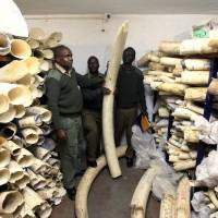 After years in the making, U.S. announces near-total ban on trade of African elephant ivory