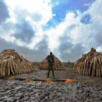 Illegal poaching, logging and mining worth up to $258 billion: report
