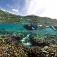 Few 'bright spots' may offer clues to protecting threatened coral reefs