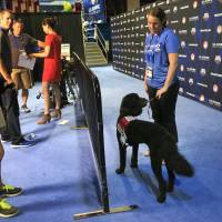 U.S. swimmers using therapy dogs to relax before races