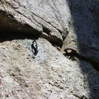 Man turns himself in over damage to rock monument in Gifu