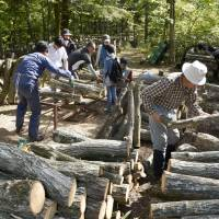 People drill holes in logs to fill them with fungi at a shiitake farm in Shika, Ishikawa Prefecture, on May 8. | KYODO