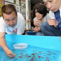 Enthusiast teaches Japanese art of goldfish scooping