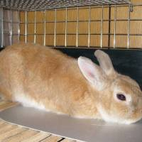 Shinagawa vet ordered to pay ¥430,000 following rabbit's death