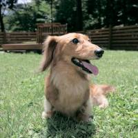 New small-breed dog run in Hakone; summer treats to beat the heat; sipping drinks under cool night skies