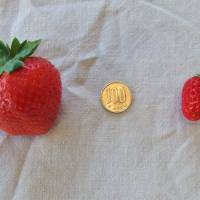 Strawberries: The gift that keeps on growing