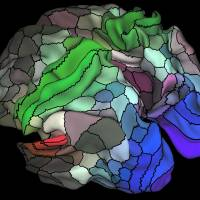 Neuroscientists chart new gray matter map pinpointing key areas of cerebral cortex