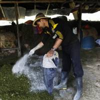 Colombia coca farmers stand by their product