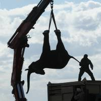 Malawi packs off 500 pachyderms in massive relocation from human encroachment