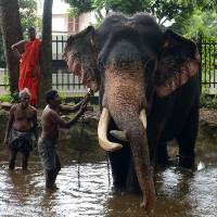 Baby elephants become latest status symbol among Sri Lanka's rich