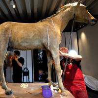 Napoleon's last and favorite horse is restored