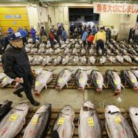 A man walks between rows of tuna at the Tsukiji fish market before an auction in Tokyo on Jan. 5.   KYODO