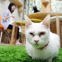 Osaka cat lover's paradise seeks to find homes for rescued strays