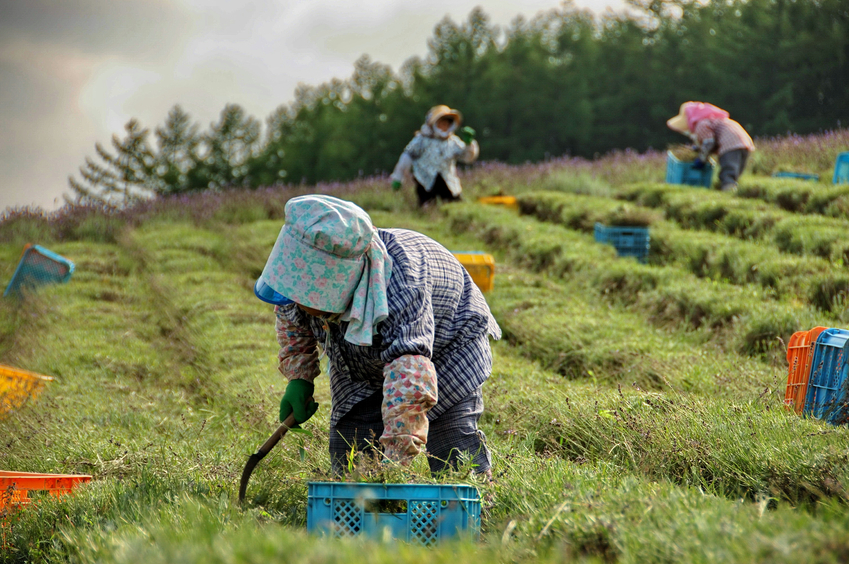 Japan's population of farmers has fallen below 2 million for the first time since records have been kept. | ISTOCK