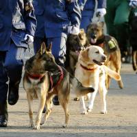 Canine conundrum hounds Japan's police as fewer large dogs available for service