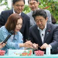 TPP may cost Abe's LDP crucial farmers' votes
