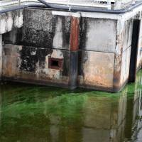 Florida algae bloom afflicts economy, sea life