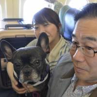 A couple fly with their dog aboard an All Nippon Airways charter in May. | KYODO
