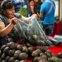 Avocado price spike sparks Mexico deforestation as farmers try to meet demand; butterflies threatened