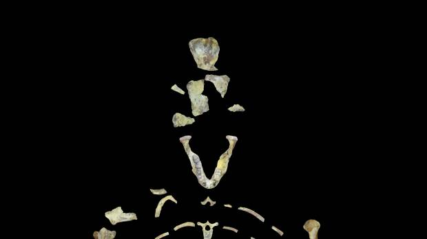 Human ancestor Lucy's tree-climbing may have led to her demise: study