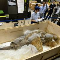 Alaskan woolly mammoths died of thirst: study