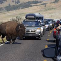 U.S. national parks turn 100 rife with pesky misbehaving visitors, wildfires