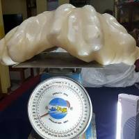 Philippine fisherman hauls up world's largest pearl, 'worth millions'