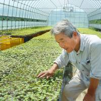 Big business creeps into agriculture as farmers dwindle