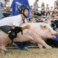 A boy participates in a popular swine rodeo competition in Seiyo, Ehime Prefecture, in Shikoku on Saturday. | KYODO