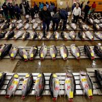 Tsukiji fish market relocation facing delay by new Gov. Yuriko Koike