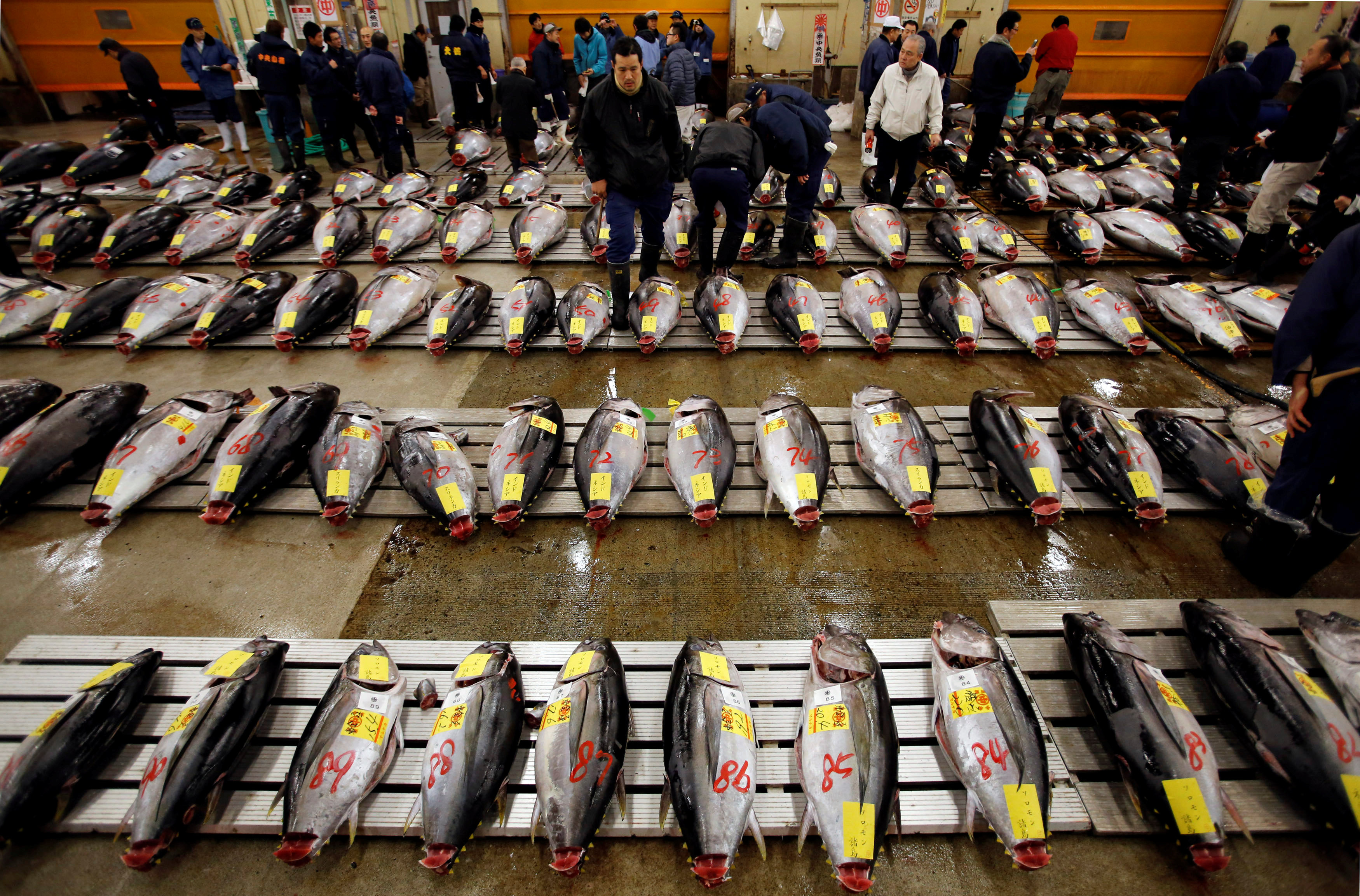 Wholesalers survey tuna at the Tsukiji fish market in Tokyo before the New Year's auction on Jan. 5. The plan to relocate the market in November will reportedly be postponed. | REUTERS