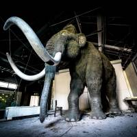 A life-sized woolly mammoth stands in an abandoned Russian theme park in Niigata Prefecture. | JORDY MEOW