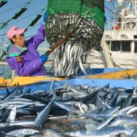 Below: A World Wild Fund for Nature report has warned that Pacific saury might be harder to come by as waters warm up and ice floes near Hokkaido shrink, depriving the fish of a critical source of nutrients. | KYODO