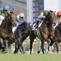 Makahiki wins the Japanese Derby at Tokyo Racecourse in May.   KYODO