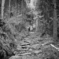 A section of forest  near Okunoin Cemetery on Mount Koya | CRAIG MOD